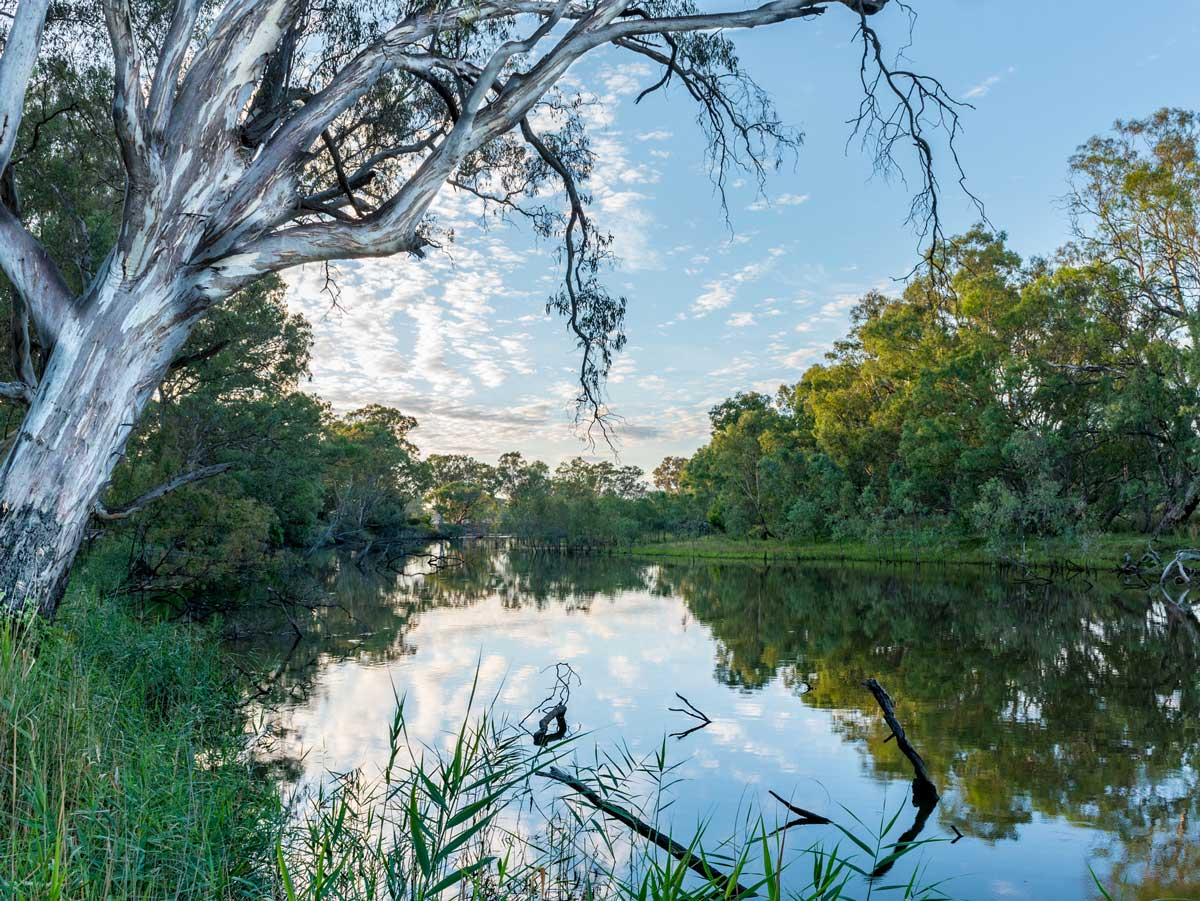 A Wodonga waterway. The water of the river reflects the blue sky and clouds. A red gum overhangs the water. Vegetation lines the banks.